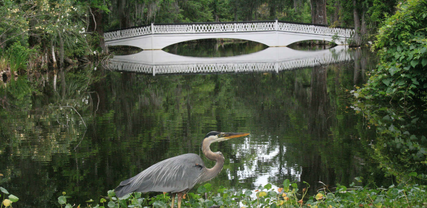 picturesque city homes and gardens.  Charleston SC Historic Plantations Gardens Official Guide
