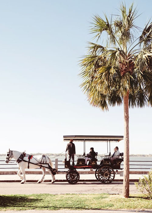 Discover Your Ideal Guided Charleston Tour